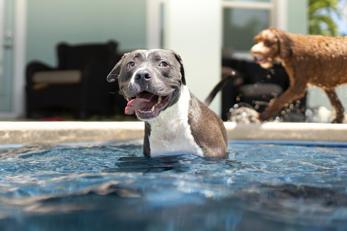 perros bañandose en la piscina